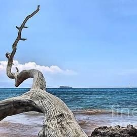 DJ Florek - Maluaka Beach