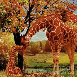 Gull G - Mama Giraffe feeding