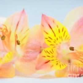 many-coloured - SK Pfphotography