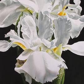 Alfred Ng - Many Shades Of White