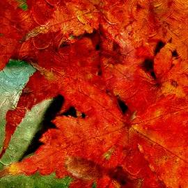 Annie Adkins - Maple Abstract