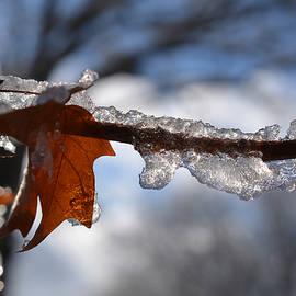 Richard Andrews - Maple Frosties