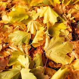 Gaukhar Yerk - Autumn feeling