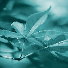 Jennie Marie Schell - Maple Leaves Teal Monochrome