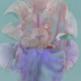 Jacquie King - March Iris Bear Run Blue