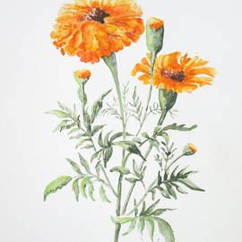 April McCarthy-Braca - Marigolds
