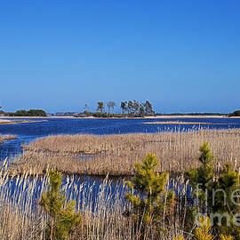 Tom Gari Gallery-Three-Photography - Marshes of Assateague