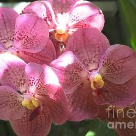 Carol Groenen - Mauve Orchids