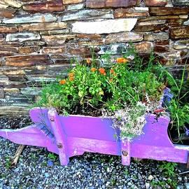 Stephanie Moore - Mauve Wheelbarrow ith flowers