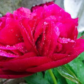 Martin Wall - May Flower Eighteen