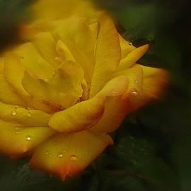 Richard Cummings - May Rose in the Rain