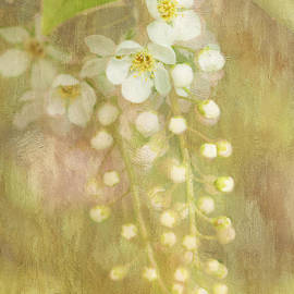 Wendy Elliott - Mayday blossoms