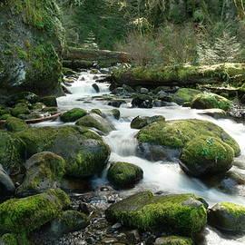 Jeff Swan - McCord Creek