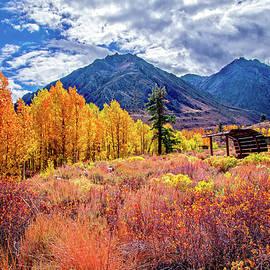 Lynn Bauer - McGee Creek Majesty