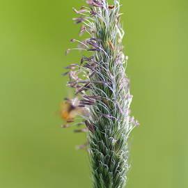 Rumyana Whitcher - Meadow Grass Flower