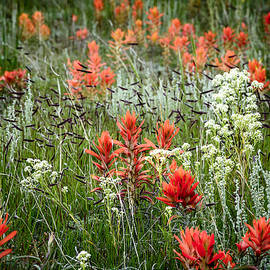 The Forests Edge Photography - Diane Sandoval - Meadow Wildflowers