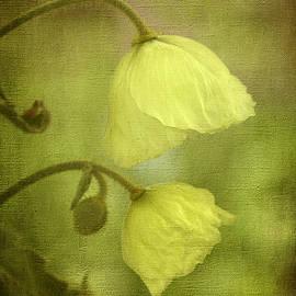 Robert Murray - Meconopsis napaulensis