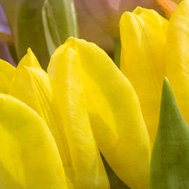 Arlene Carmel - Mellow Yellow