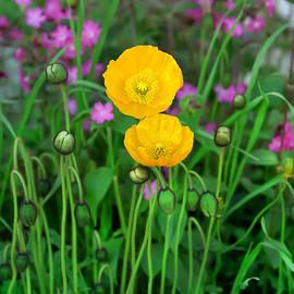 Bijan Pirnia - Blooming At 10200 Feet Above Sea Level