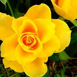 Dianne Pettingell - Mellow Yellow