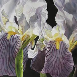 Alfred Ng - Memory Of The Iris