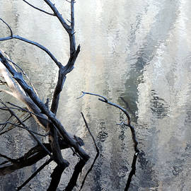 Eric Forster - Merced River And Branches