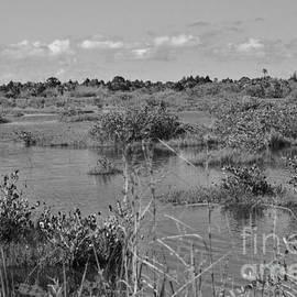 Chuck  Hicks - Merritt Island Wetlands