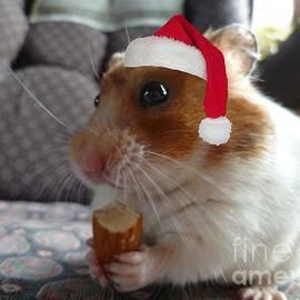 Vicki Spindler - Merry Christmas Hamster