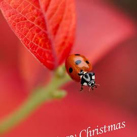 Mickey At Rawshutterbug - Merry Christmas