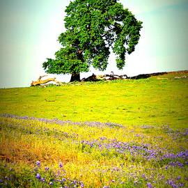 Pamela Patch - Mesa Oak in Spring
