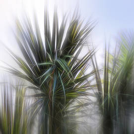 Evie Carrier - Miami Palms