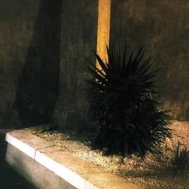 Julian Darcy - Midnight in the garden