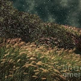 RC deWinter - Midnight Marsh