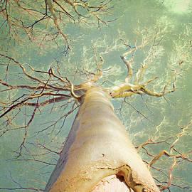 Hal Halli - Mighty Tree