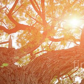 Kira Yan - Mighty tree