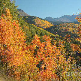 Frank Townsley - Million dollar aspens