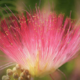 Donna Kennedy - Mimosa Silk Optics