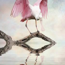 Brian Tarr - Mirror, Mirror,