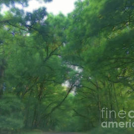 Luther Fine Art - Missouri Forest Arches
