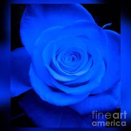 Joan-Violet Stretch - Misty Blue Rose