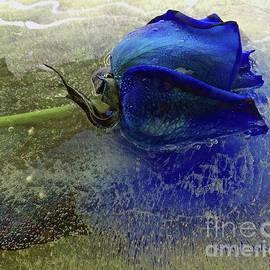 Terry Foster - Misty Blue