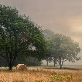 Robin-lee Vieira - Misty Fields