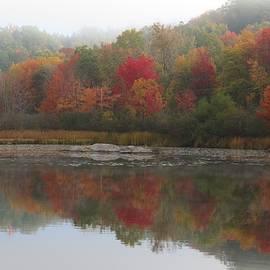 MTBobbins Photography - Misty Foliage Scene