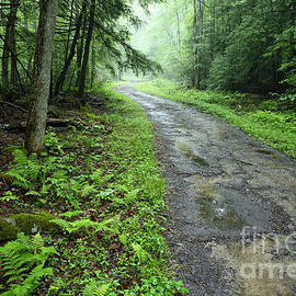 Thomas R Fletcher - Misty Forest Road
