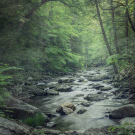Suzanne Harford - Misty Forest Stream