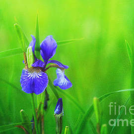 Reflective Moment Photography And Digital Art Images - Misty Iris