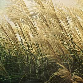 Shawna  Rowe - Misty Morning Grass