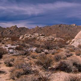 Soli Deo Gloria Wilderness And Wildlife Photography - Mojave Preserve - Kelbaker Road