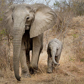 Linda D Lester - Mom and Baby Elephant
