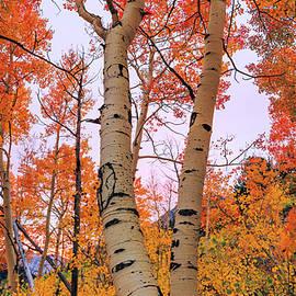 Chad Dutson - Moments of Fall